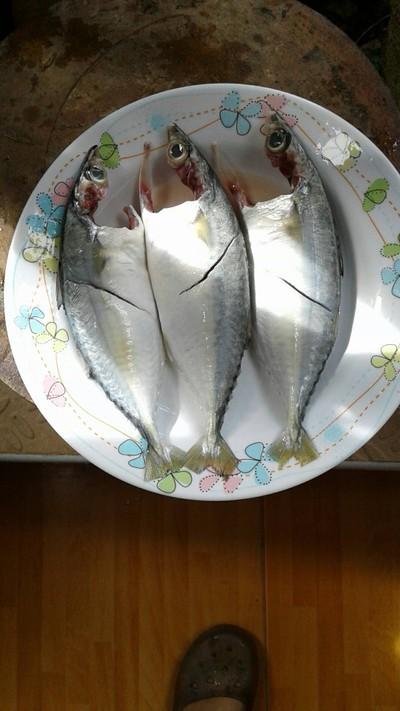 วิธีทำ ปลาทูต้มเค็ม