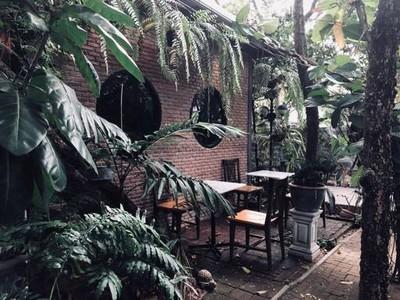 Coffee Tree นนทบุรี