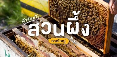 เที่ยวสวนผึ้งหาดใหญ่ Big Bee Garden ชมธรรมชาติกลางใจเมือง เข้าชมฟรี!