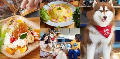 คาเฟ่น้องหมาแห่งแรกในชลบุรี Husky House Cafe คาเฟ่คูล ๆ ของคนรักหมา