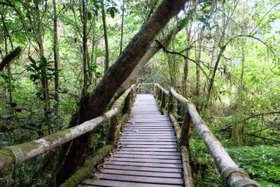 เส้นทางศึกษาธรรมชาติอ่างกา (อ่างกา)