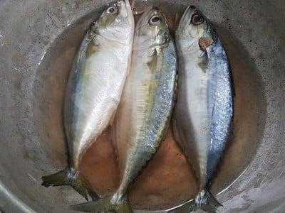 วิธีทำ ปลาทูนึ่งทำเองได้