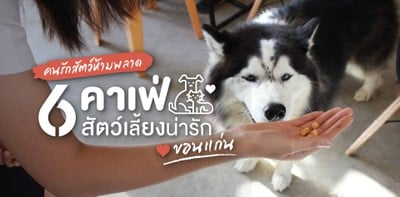 6 คาเฟ่สัตว์เลี้ยง ขอนแก่น ที่คนรักสัตว์ไม่ควรพลาด