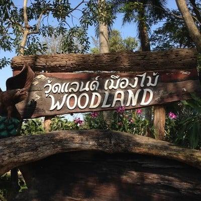 Wood land เมืองไม้