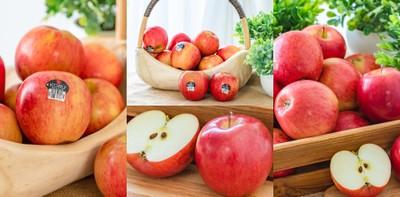 """""""Koru Apple"""" แอปเปิล หวาน กรอบ ฟิน นำเข้าจากนิวซีแลนด์"""