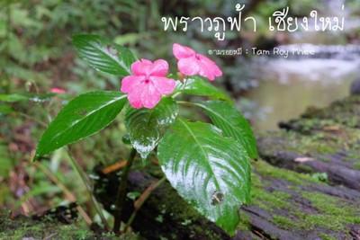 พราว ภู ฟ้า (Proud Phu Fah)