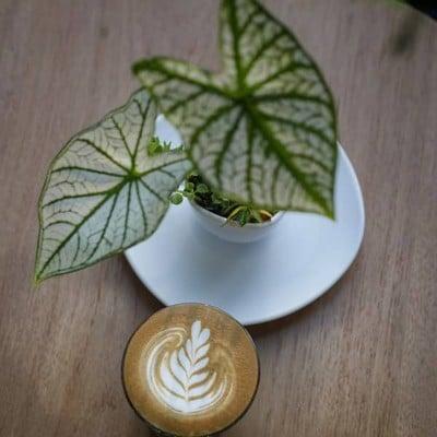 True Blue Coffee Brewers