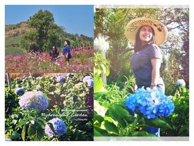 """1คืน เที่ยวหลงฤดู""""ทุ่งดอกไฮเดรนเยีย""""หน้าร้อน ณ บ้านขุนแปะ"""