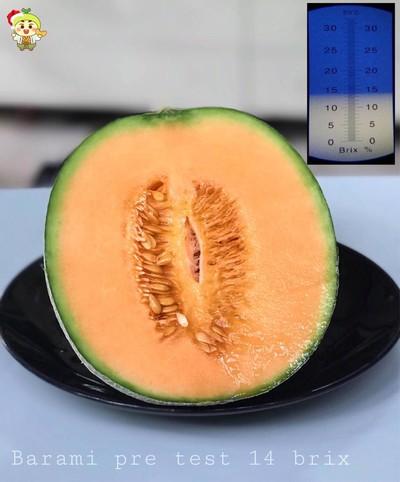 อิจิคุงเมล่อนฟาร์ม (ICHIKUN Melon Farm)