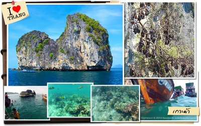 เกาะม้า ตำบลเกาะลันตาใหญ่ อำเภอเกาะลันตา กระบี่ (เกาะม้า)