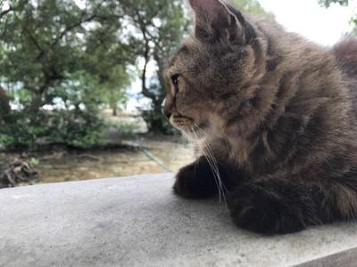 นั่งประกบข้างๆ ถูกใจทาสแมว
