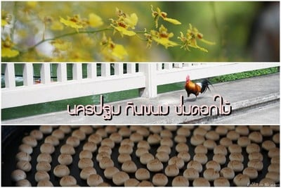นครปฐม กินขนม ชมดอกไม้