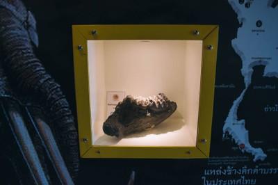 พิพิธภัณฑ์ช้างดึกดำบรรพ์ทุ่งหว้า