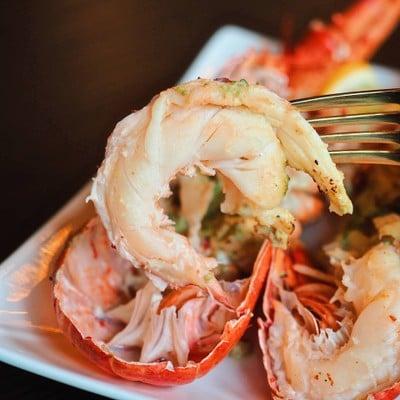 Lobster 490