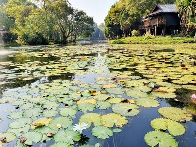 ลำปางริเวอร์ลอดจ์ (Lampang River Lodge)