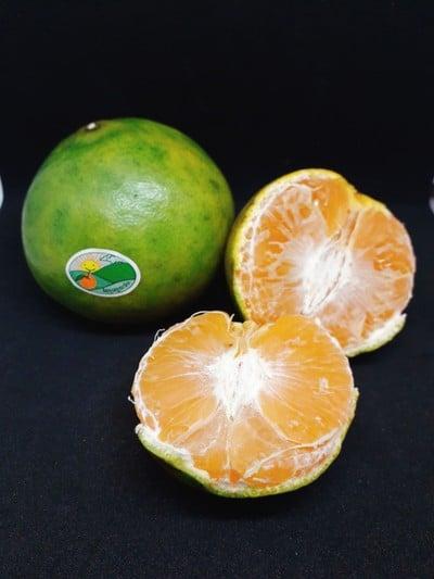 ภูตะวัน ส้มโชกุนเบตง