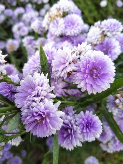 ดอกไม้สวยหอม