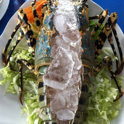 sashimi lobster!