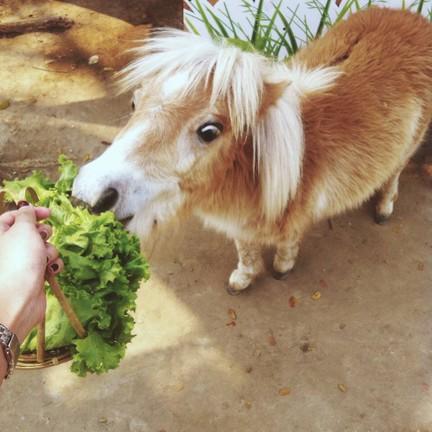 ม้าแคระ มีอาหารขาย 20฿ ต่อตะกร้า