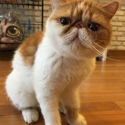 Year of the Cat Cafe ถนนกัลปพฤกษ์