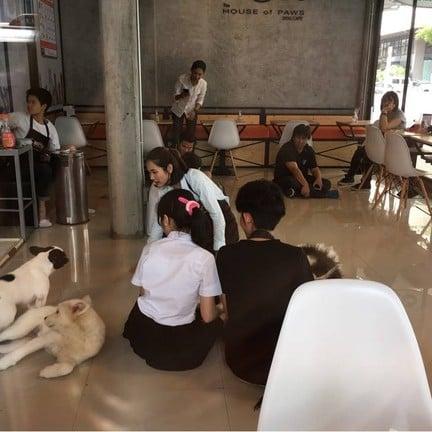 HOPs Dog Cafe - The House of Paws Dog Cafe สยามสแควร์ ซอย 8