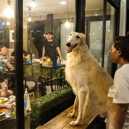 Big Dog Cafe  Ratchada
