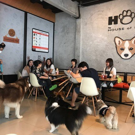 HOPs Dog Cafe - The House of Paws Dog Cafe สยามสแควร์ ซอย 8