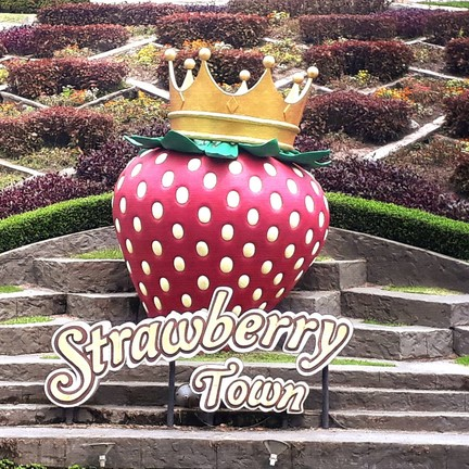 strawberry town