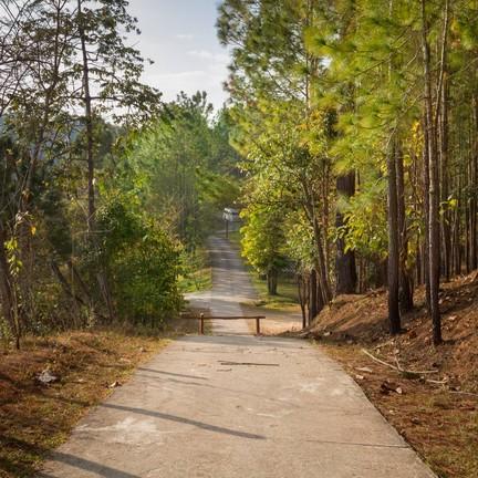 เส้นทางที่โอมล้มไปด้วยป่าสน