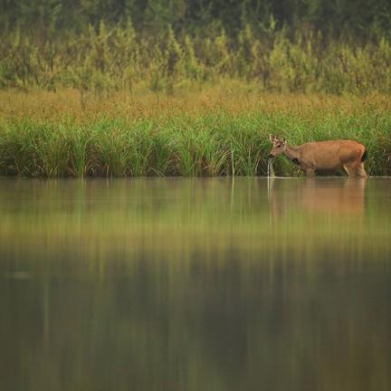 เขตรักษาพันธุ์สัตว์ป่าภูเขียว