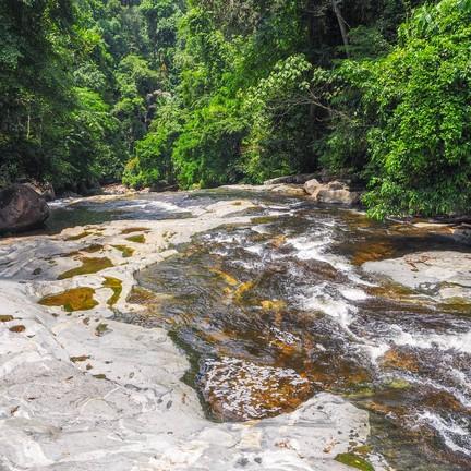 ป่าฮาลาบาลา