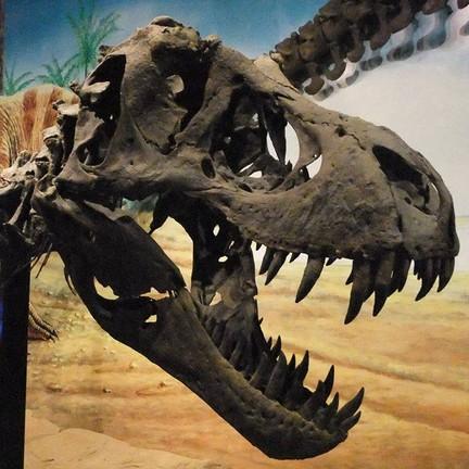 รูปภาพจาก FB พิพิธภัณฑ์สิรินธร-Dinosaur museum