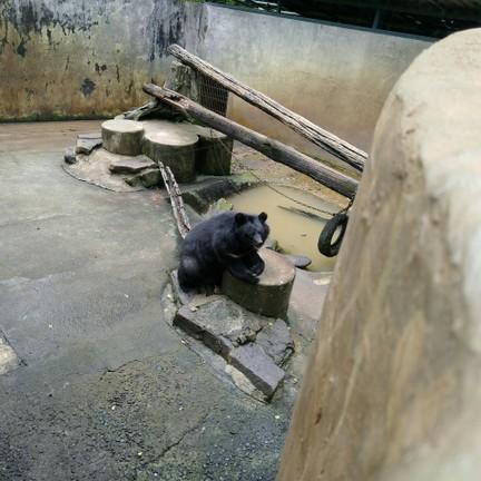 สวนสัตว์เปิดเขาค้อ