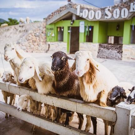 1000Sook Food and Farm