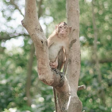 ศูนย์อนุรักษ์ป่าชายเลน คลองโคน