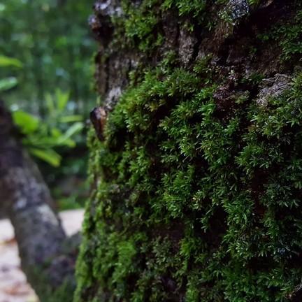 ศูนย์วิจัยป่าชายเลนหงาว