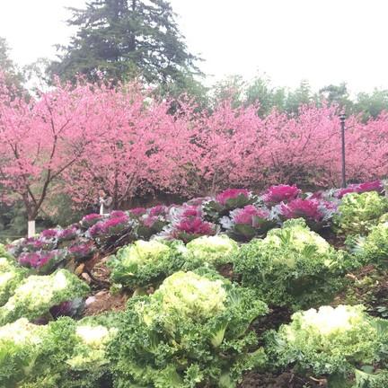 สวน ๘๐ ช่วงมกราคม จะพบนางพญาเสือโคร่งบานอวดดอกสวย ๆ เต็มไปหมด :)