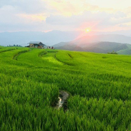 Sunset over staircase rice field 🌱