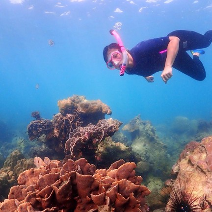 ดำน้ำดูปะการัง