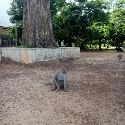 สวนธรรมชาติ (สวนลิง) กุมภวาปี