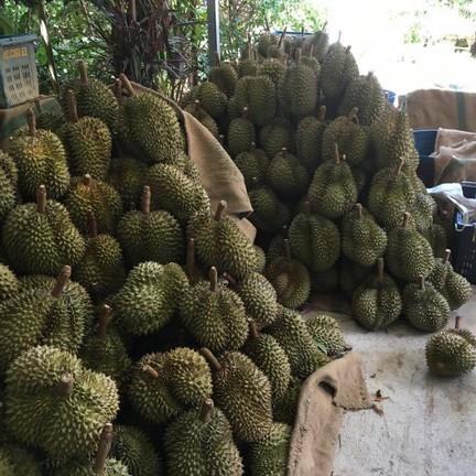 สวนมังคุดไทย