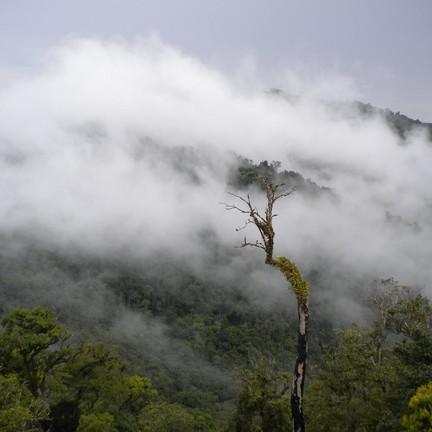 ขอขอบคุณรูปภาพจาก FB อุทยานแห่งชาติแม่วงก์ Mae Wong National Park