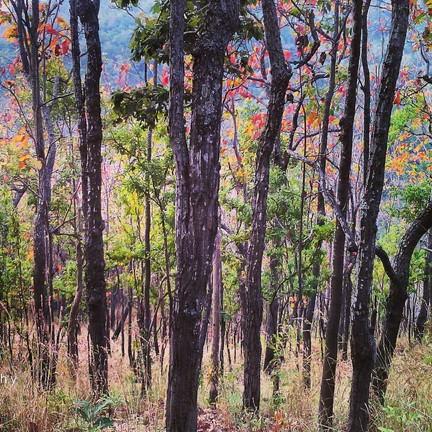 ขอขอบคุณรูปภาพจาก FB อุทยานแห่งชาติคลองลาน - Khlong Lan National Park
