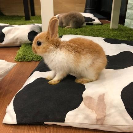 กระต่ายอวดดี