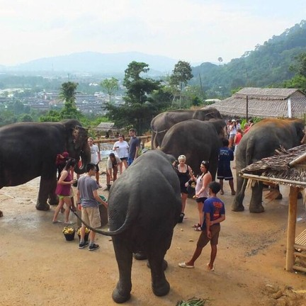 Elephant Jungle Sanctuary Phuket