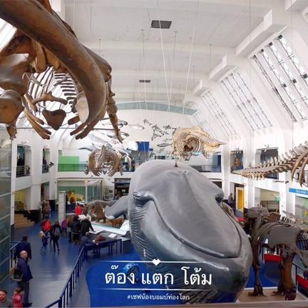 วาฬสีน้ำเงิน สัตว์เลี้ยงลูกด้วยนมที่ขนาดใหญ่ที่สุดบนโลก
