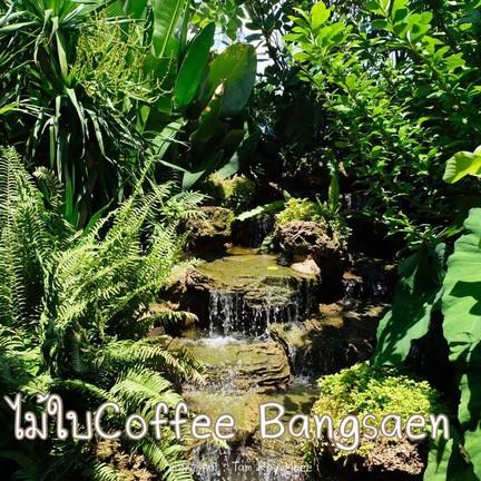 ไม้ใบ Coffee Bangsaen