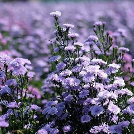 ขอบคุณภาพจากเพจ : I love flower Farm
