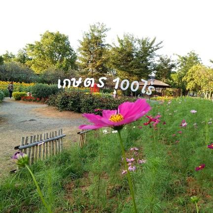 สวนเกษตร 100 ไร่