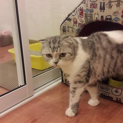 ขอขอบคุณรูปภาพจาก FB รับฝากแมว โรงแรมแมว Cat-inn แคทอินน์